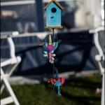 Fugle til mit fuglehus