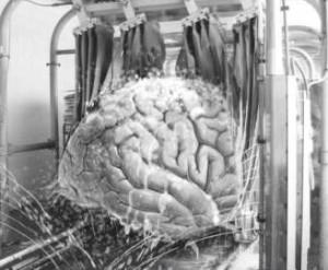 Total hjernevask og hvordan man kæmper