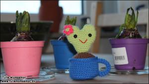 Min egen lille, hjerte kaktus <3