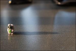 Lille hamster - stor skygge