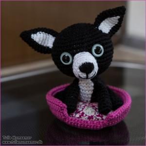 Chihuahua, Pinky til Sarah