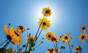 En blomst til Tanja